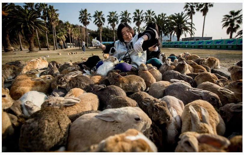 Rabbit Island Or Bunny Island