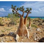 Island Of Socotra